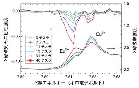 図3:ユーロピウム元素(Eu)のX線磁気円二色性(XMCD)スペクトル:[上]とX線吸収スペクトル:[下]の磁場依存性