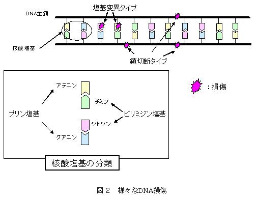 日本原子力研究開発機構:プレス...